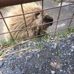 Alaska Wildlife Conservation Center Foto