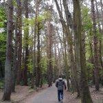 bosque alrededores