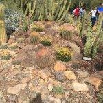 More cactus gardens