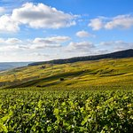 Vineyards in Hautviller