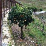Photo of Quinta do Pego