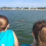 Dolphin siting - one of many!