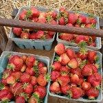 Myers Strawberry Farm