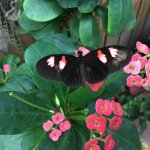 Key West Butterfly and Nature Conservatory Foto