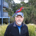 Australians are very friendly and so is this crimson rosella!