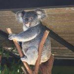 Koala... very ready for his close-up!