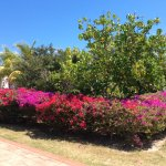 Hotel Playa Cayo Santa Maria Foto