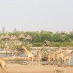 Giraffe area!