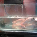 fishtank inside :)