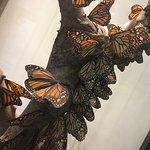 Butterfly Park of Benalmadena Foto