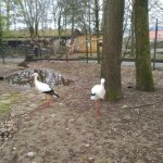 Photo of Wildpark Pforzheim