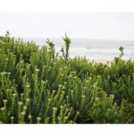 Vegetation and the sea