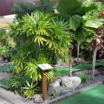 Putt putt in rainforest setting