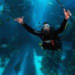Shark Dive in Dubai Mall Aquarium