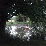 The Wild Pond with Duck House