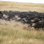 Wildlife sighting at Mara Plains Camp, Kenya