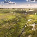 Great Plains Conservation Duba Plains Camp Foto