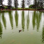pond with ducks and fish