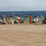 Sulla strada carovana di cammellieri