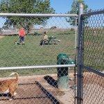 Dogs enjoying the dog park