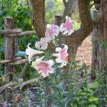 May gardens at Das Garten Haus