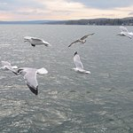 Looking south on Canandaigua Lake from the pier