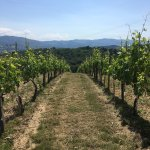 Tuscan Wine Tours with Angie Foto