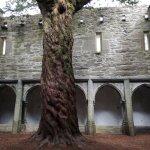 Foto di Muckross Abbey