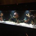 New Aquarium, New Fish!