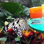 Photo of Papiliorama