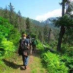 Our cabins have direct access to the trail system in Kachemak Bay State Park