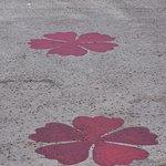 Flowers on the walkway
