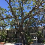Beautiful live oak to view from your rocking chair