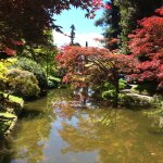 Japanese maples in the gardens