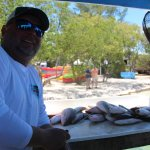 All the Yellowtail we caught