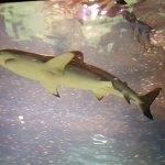 Photo of Lanzarote Aquarium