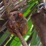 Photo of Tarsier Conservation Area
