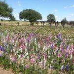 Glorious Fields of Flowers - Wildseed Farms