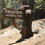 Entrance to Sequoia National Park - Hwy 180