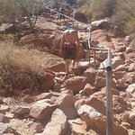 Echo Canyon trail is harder going up than Cholla's