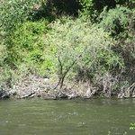 Klamath River May 2017