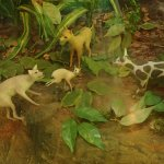 the mouse deer overcoming hunting dogs