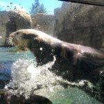 Foto di Vancouver Aquarium