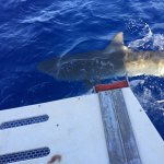 Hawaii Shark Encounters, North Shore, Oahu