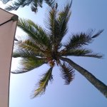Ranveli Beach Resort Foto