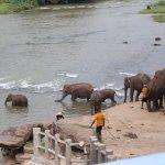 Zdjęcie Hotel Elephant Park