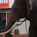 Photo of Hotel Elephant Park