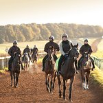 On the Gallops (Contact us to find out how to visit the famous Warren Hill Gallops)