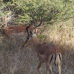 Photo of Kambaku Safari Lodge