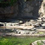 Animal Kingdom Safari Attraction